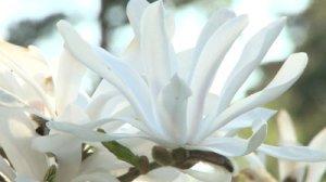 Wearing White Robes