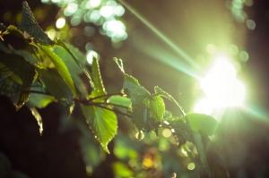 image by MamaOwlPhoto