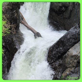 Living Waters Flow