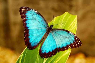butterfly vida