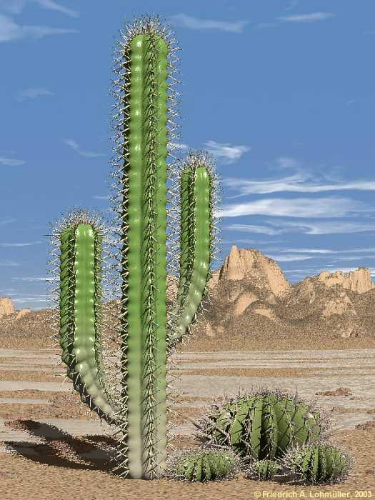 Equipped for Desert Seasons