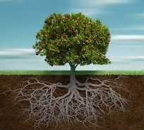 Deep Roots Bear Fruit